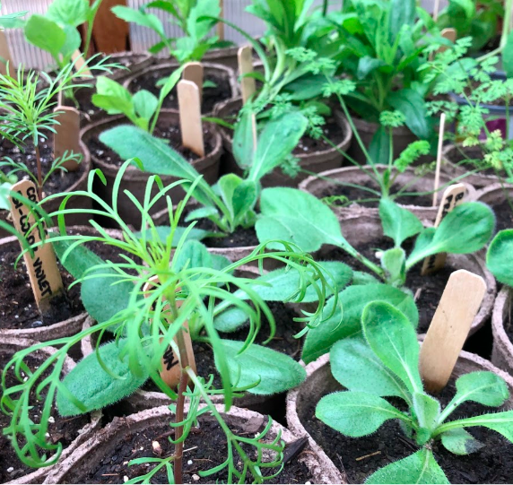 Seedling Sale by the Outdoor Life Community